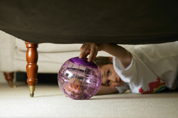 are hamsters good pets - hamster in exercise ball