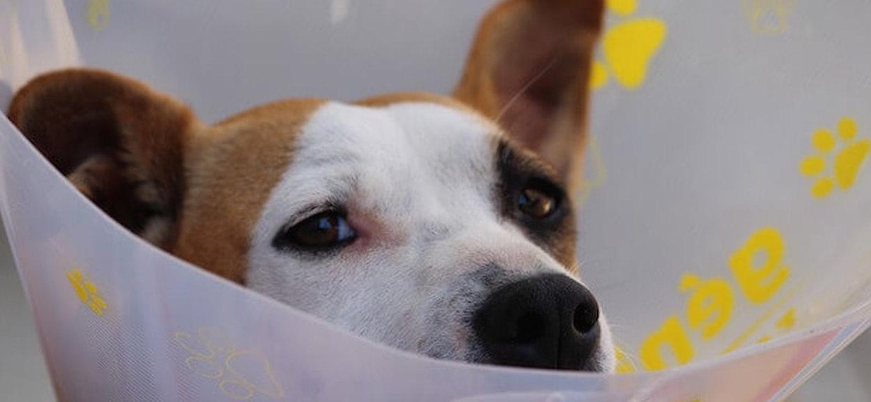Got a sick dog? Get help fast.
