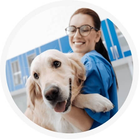 Unlimited conversations with Veterinarians