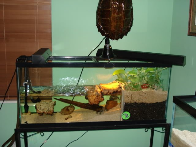 I just purchased a male spotted turtle and currently for Fish tank turtles