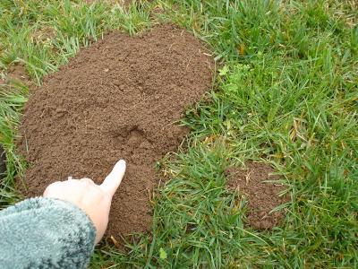 My Lawn Is All Dirt Mycoffeepot Org